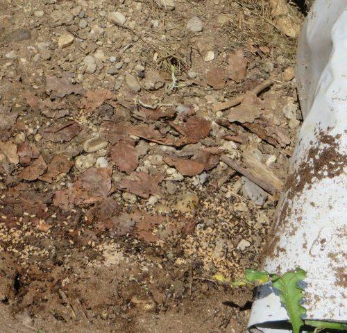 Unter diesen Matten leben sehr gerne große Ameisenkolonien. Unter fast jeder Matte haben es sich die Mäuse  (-familien) bequem eingerichtet. Schnecken, die dort Zuflucht vor der Hitze gesucht haben, verenden darunter, weil es zu heiß ist. Es stellt sich die Frage: Sind diese Tagesverstecke als längerer Aufenthaltsort für Amphibien geeignet? Eher nicht!
