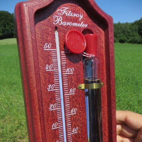Die Temperaturen bei normaler Sonneneinstrahlung betragen in der Regel zwischen 38 und 44 Grad Celsius ganztägig. Unter diesen Matten ist es immer trocken! Und wieder stellt sich die Frage: Können Amphibien das aushalten?