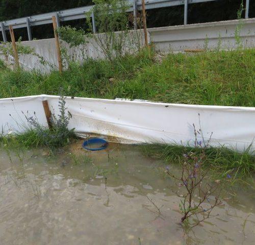 Überschwemmte Fangeimer : Evtl. befindet sich eine Kröte am Eimerboden? Alle anderen können entkommen. Damit stellt der Zaun ausschließlich eine Barrierefunktion dar.