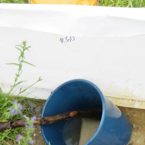 Nach starken Regenfällen drückt das Bodenwasser die Eimer heraus. Solange das Wasser im Gelände nicht abgelaufen ist, solange kann man die Eimer auch nicht wieder in den Boden drücken. Nicht geeignet zum Fangen von Amphibien.
