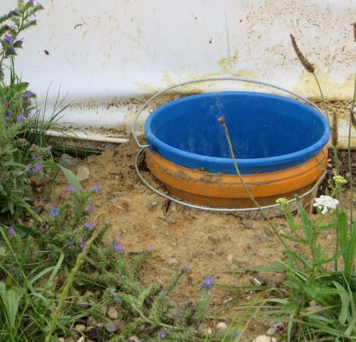 Dieses sogenannte anerkannte Methodenkonzept ist nicht geeignet für Amphibien. Fangeimer müssen bodentief verbaut sein, sonst funktionieren sie nicht! Die Folge ist ausschließliche Barrierefunktion des Zaunes.